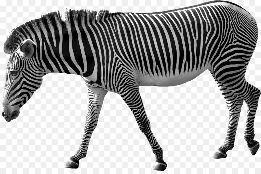 Картинки прозрачных животных