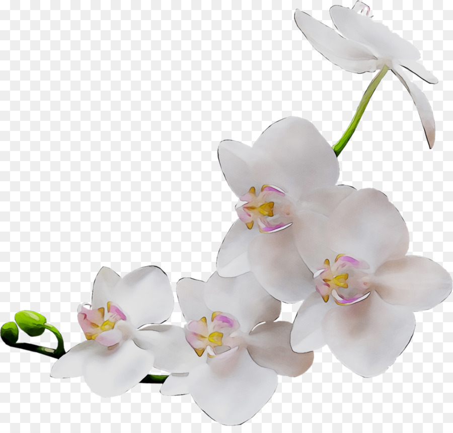 Пнг картинки на белом фоне