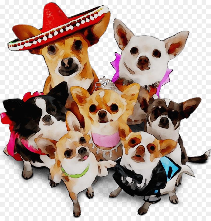 Открытка с днем рождения с собакой чихуахуа