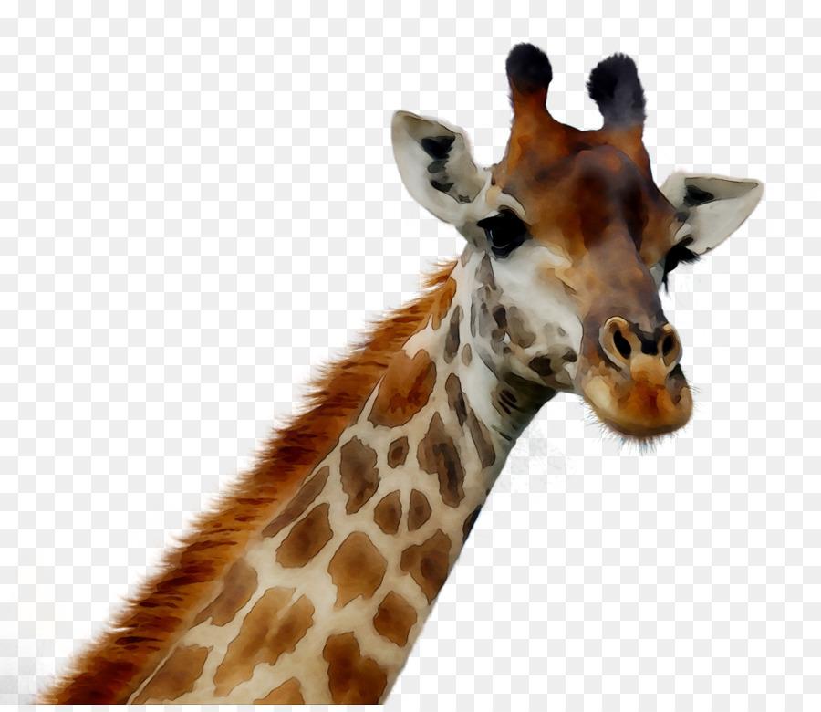 Животные без головы картинки