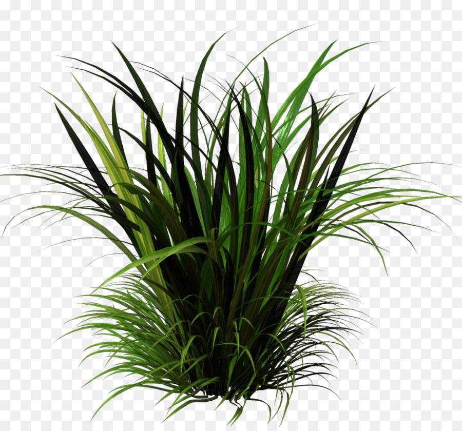 Картинки растений с прозрачным фоном