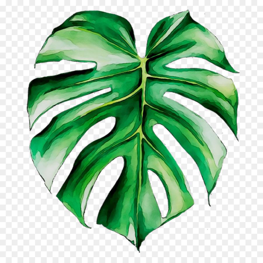 Картинка тропические листья