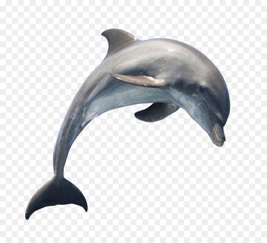 которые картинки дельфины на белом фоне сравнению недавним прошлым