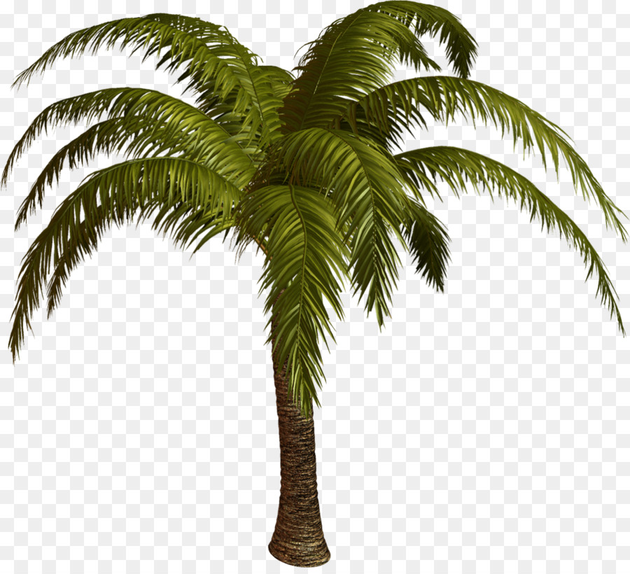 картинки пальма пнг пищи