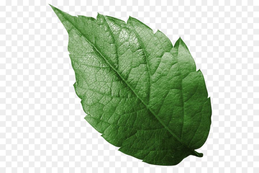 Картинки листки деревьев