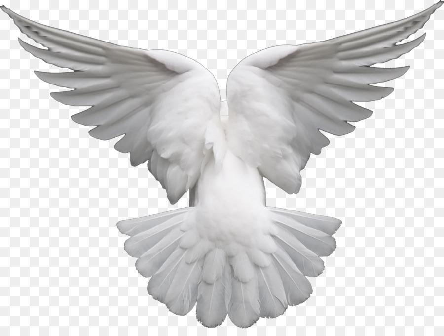 крылья голубя картинка занятий хатха-йогой представлены