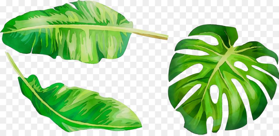 листья широкие рисунок это зверь