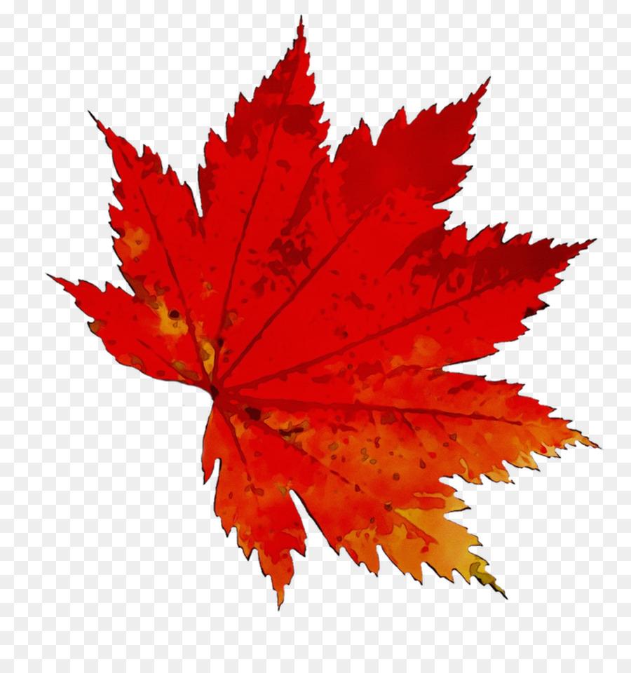 Картинки осенних листьев на прозрачном фоне, парню днем рождения
