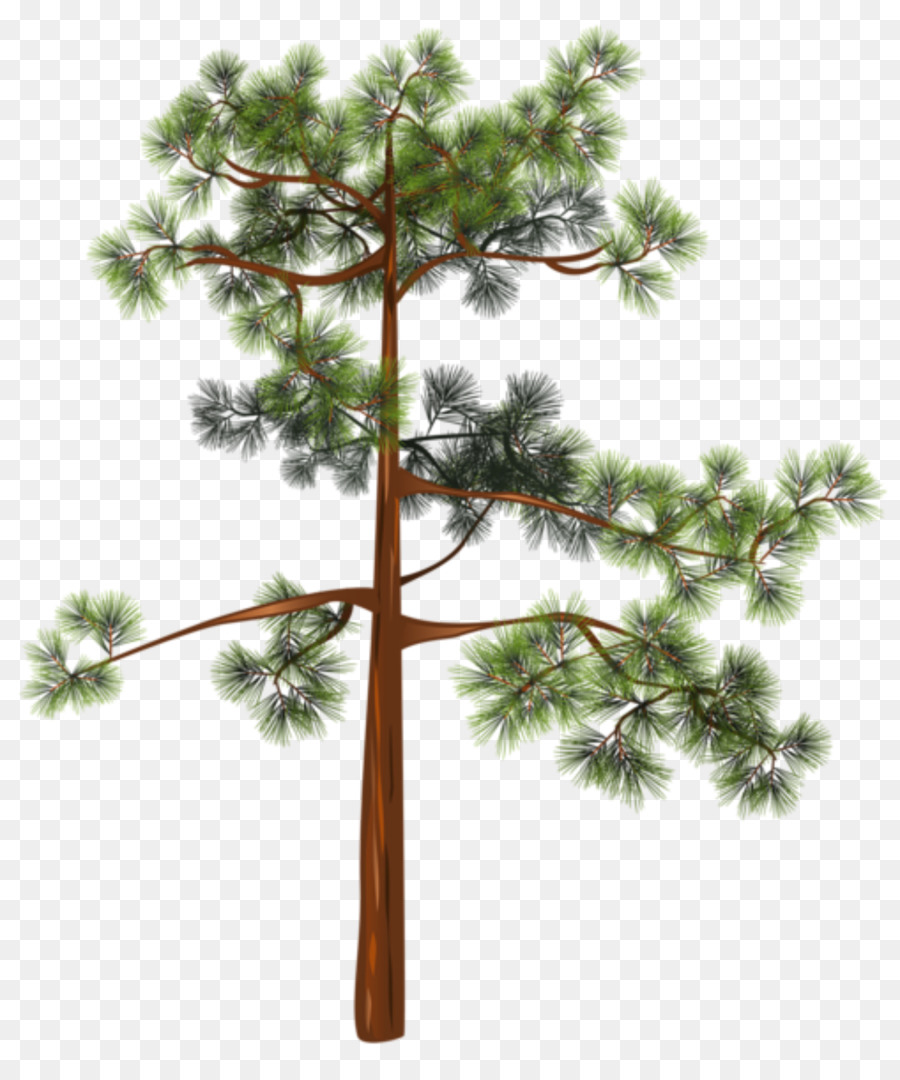 Картинки деревья сосна