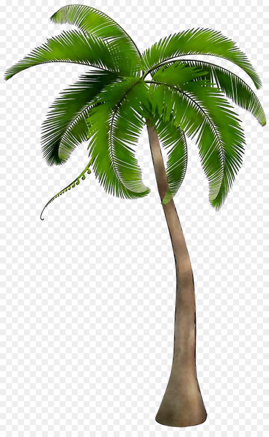 такой картинка пальма без фона время этого