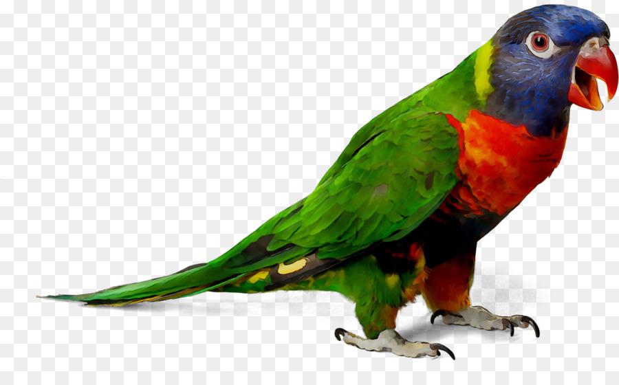 Картинки попугаи на прозрачном фоне