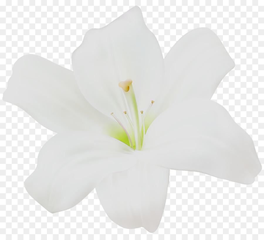 Картинки с белыми цветами на прозрачном фоне