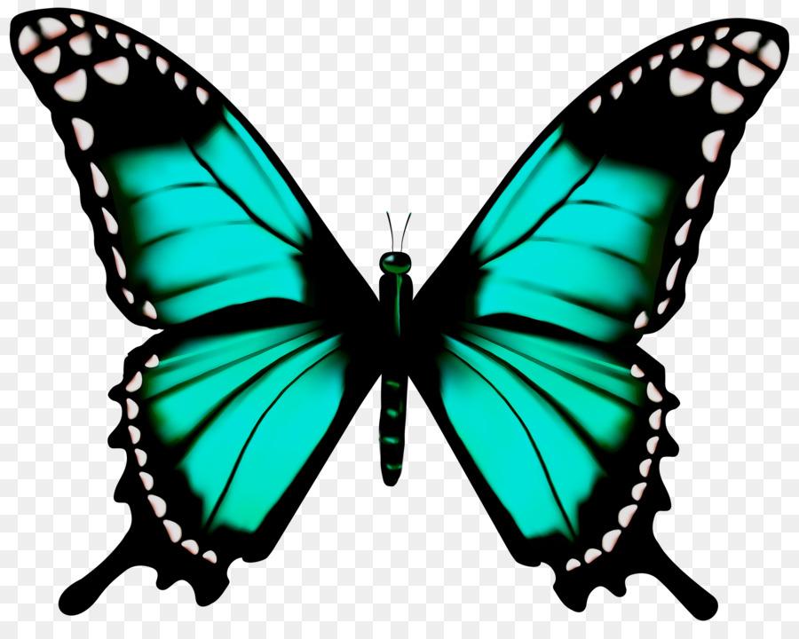 Картинки бабочки прозрачные