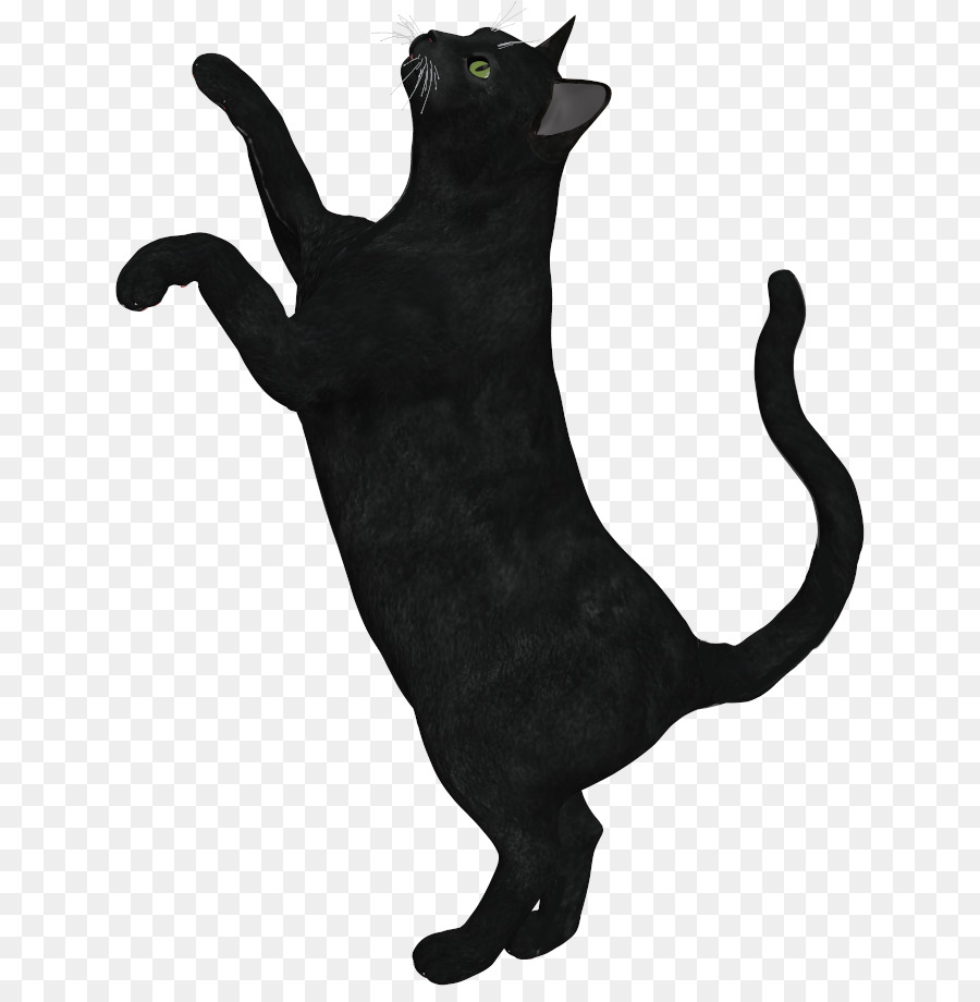картинка черного кота без фона доставили