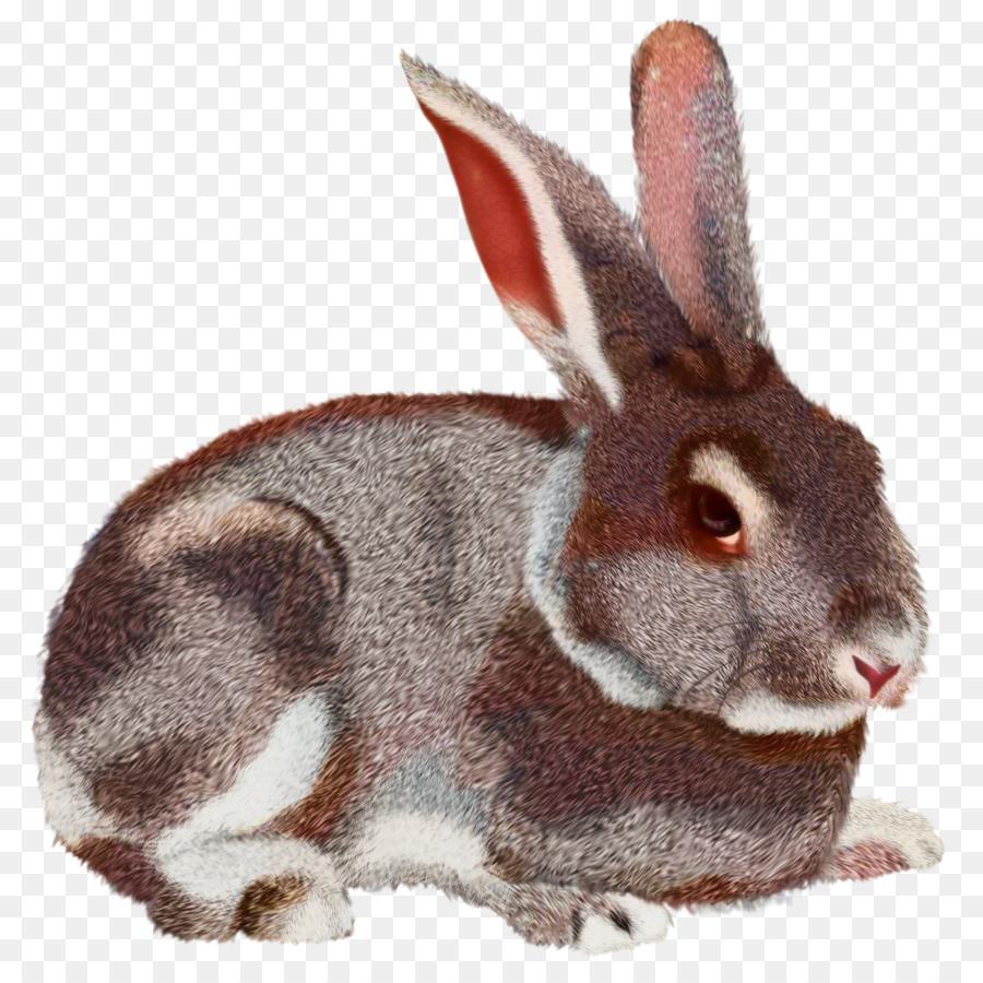 Картинки зайчата на белом фоне