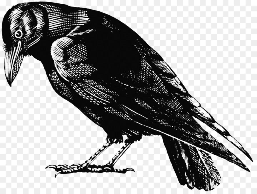Черно белый рисунок вороны