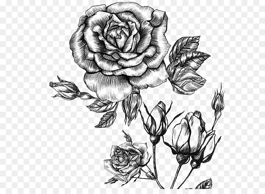 Картинки розы графика