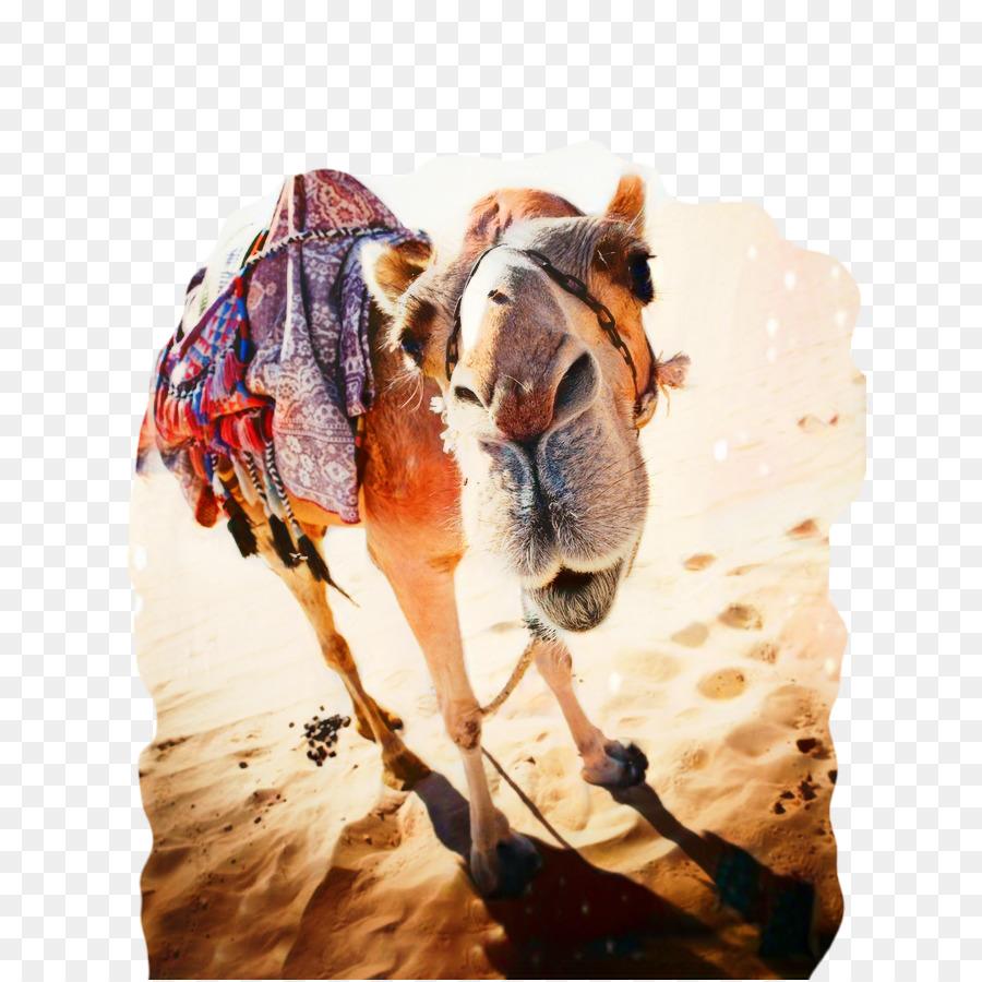 уже картинка из животных найди верблюда для психологов, помогающие
