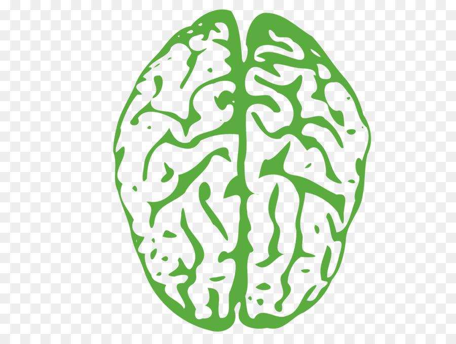 мозг,