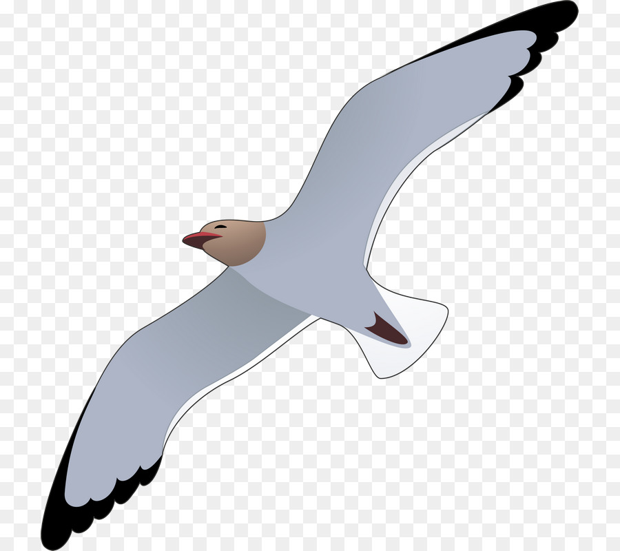 Картинки чайка рисунок