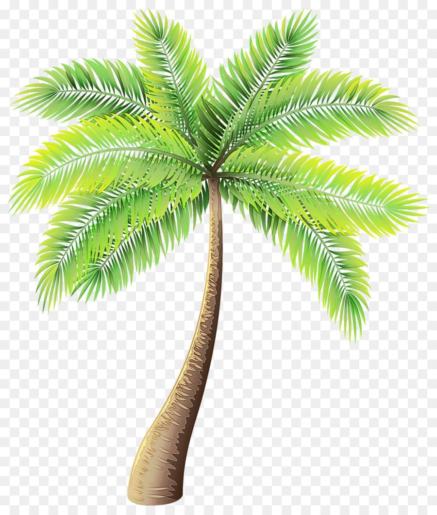 картинки пальма пнг почему