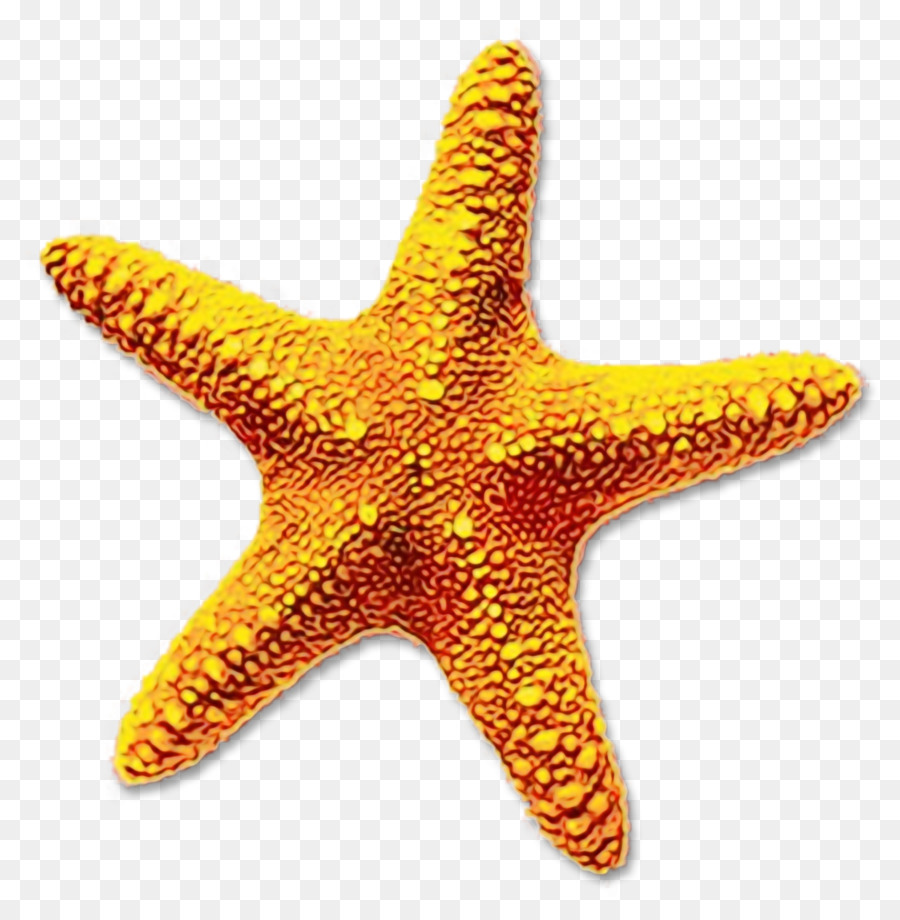 Морская звезда картинка без фона