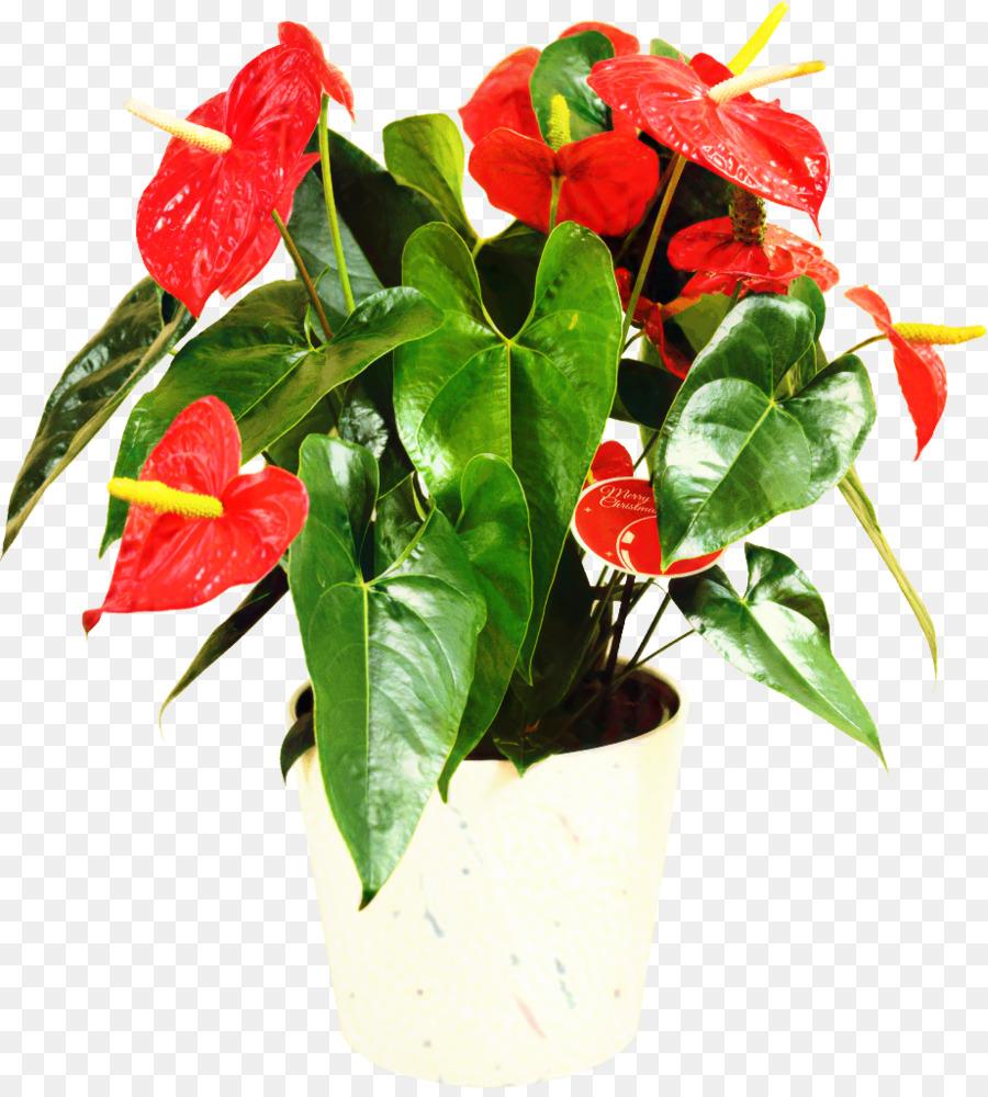 достопримечательность необитаемый комнатные растения с красным цветком фото с названием чувствую себя