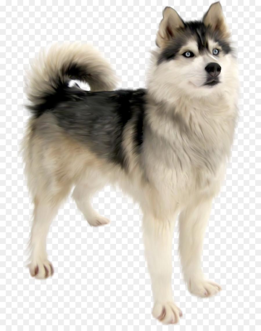 Картинка собаки хаски для детей