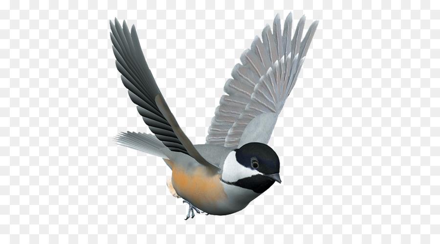 Птицы в полете картинки на прозрачном фоне