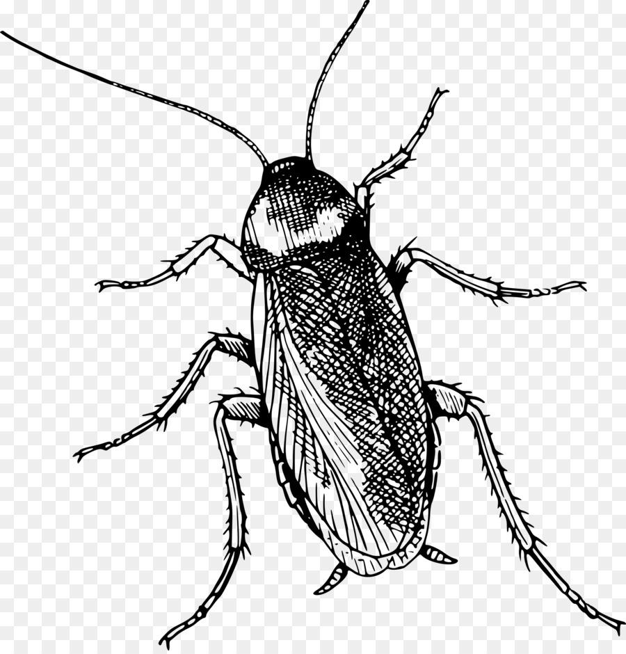 Картинка таракан для детей раскраска
