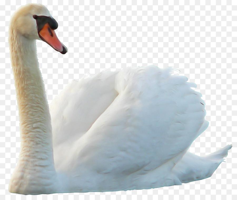 Белая лебедь картинки на прозрачном фоне