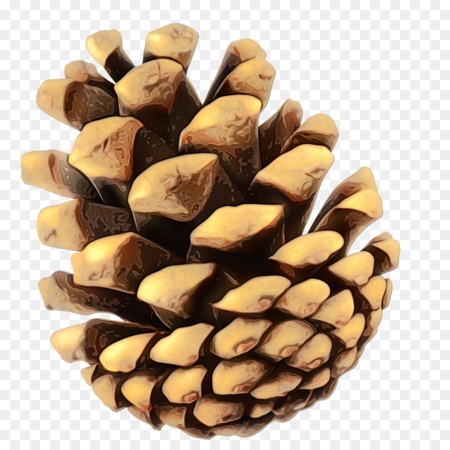 картинка ореха ели