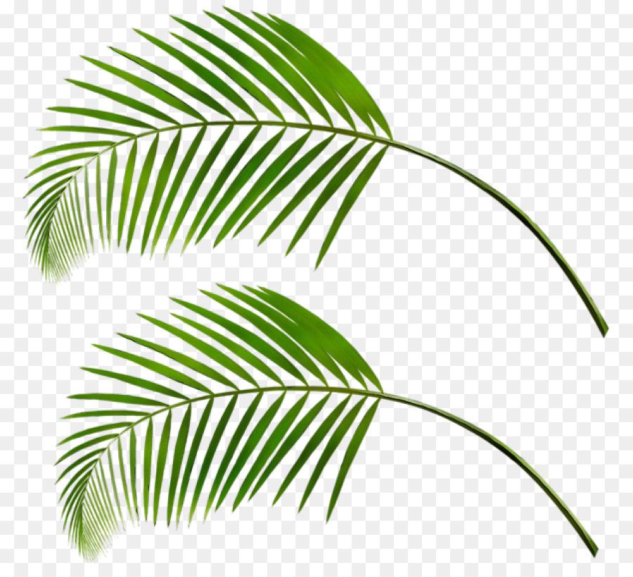 важно, пальмовый листок картинка что напротив всех