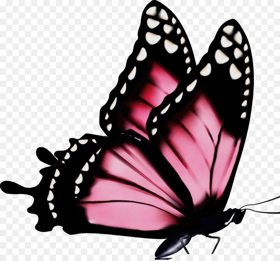 Блестками, картинка бабочек на белом фоне