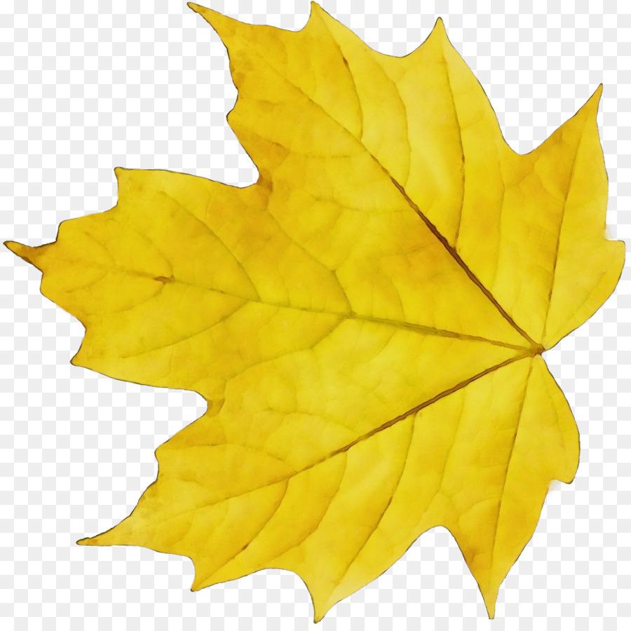 Картинка кленовый лист пнг