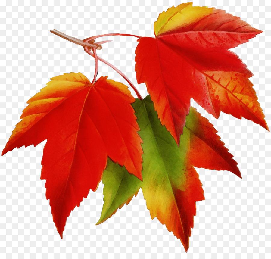 Картинки осенних листочек