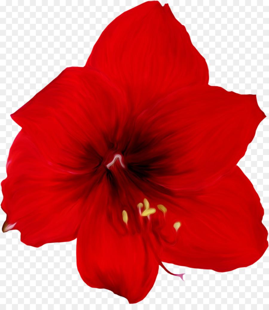 Картинка красный цветок без фона