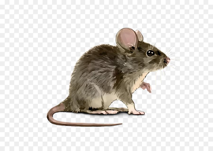 Картинки мышка без фона
