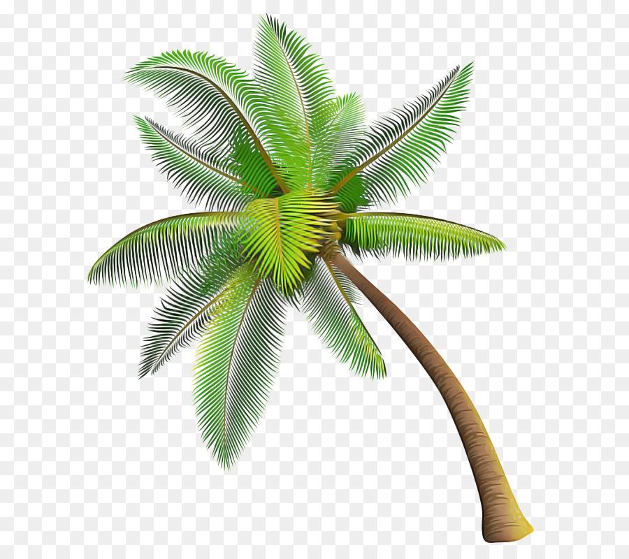 таких смесей картинка пальма без фона космоса, открытого пространства