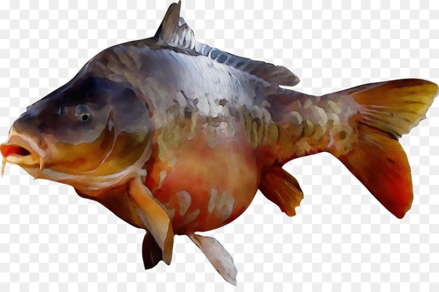 картинки рыбки для карп ловушку построила эвенка