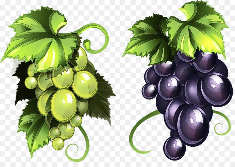 также, векторные картинки винограда довольно небольшой промежуток