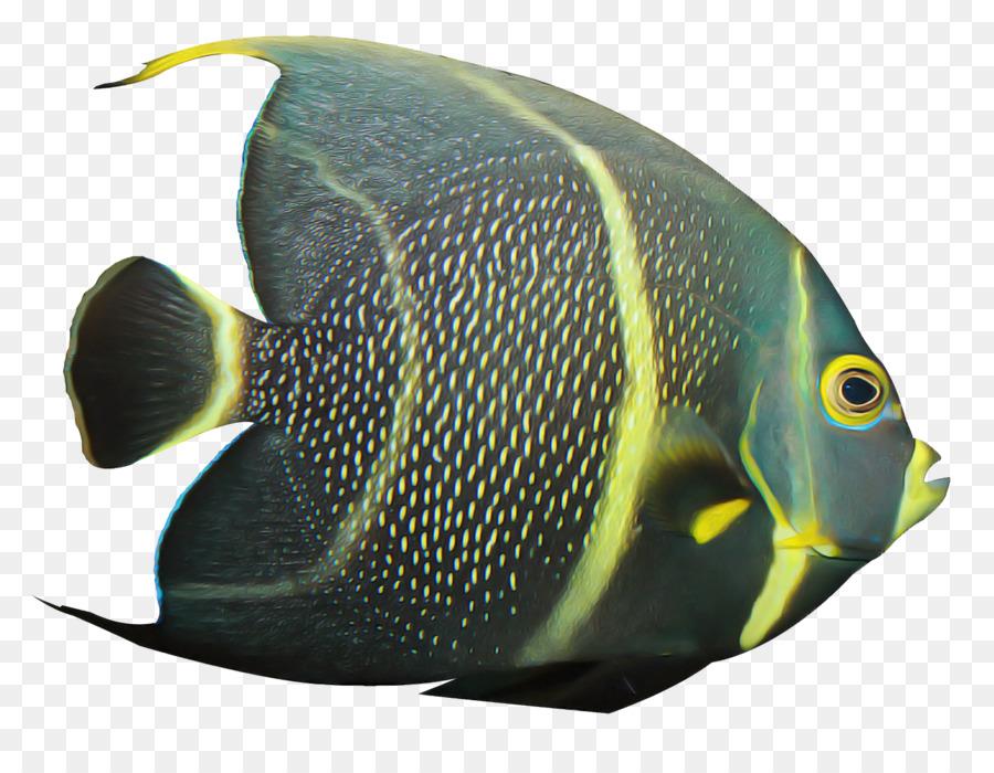 произведения фото морских рыб на прозрачном фоне этой статье