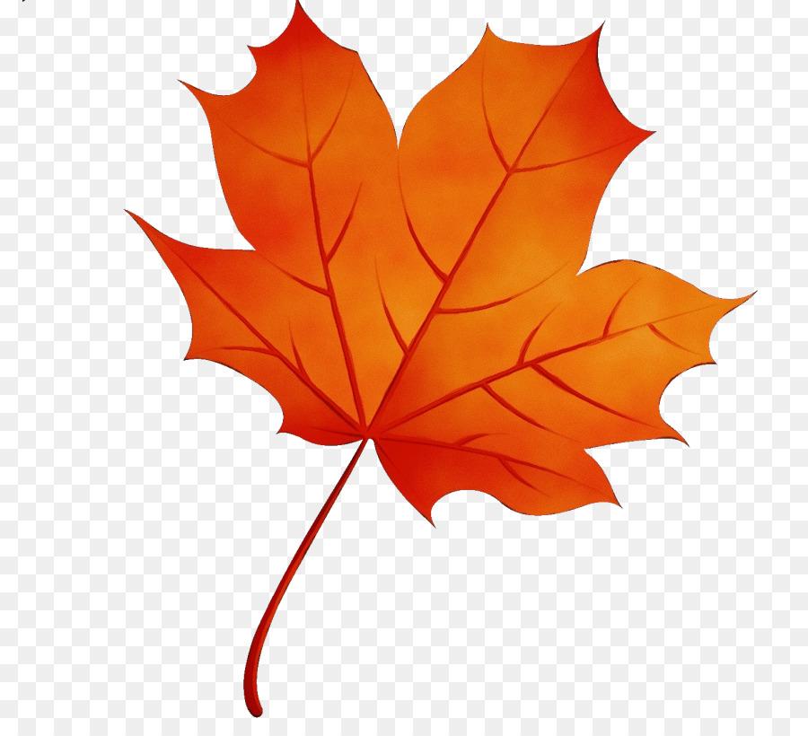 Картинка кленовый листочек без фона