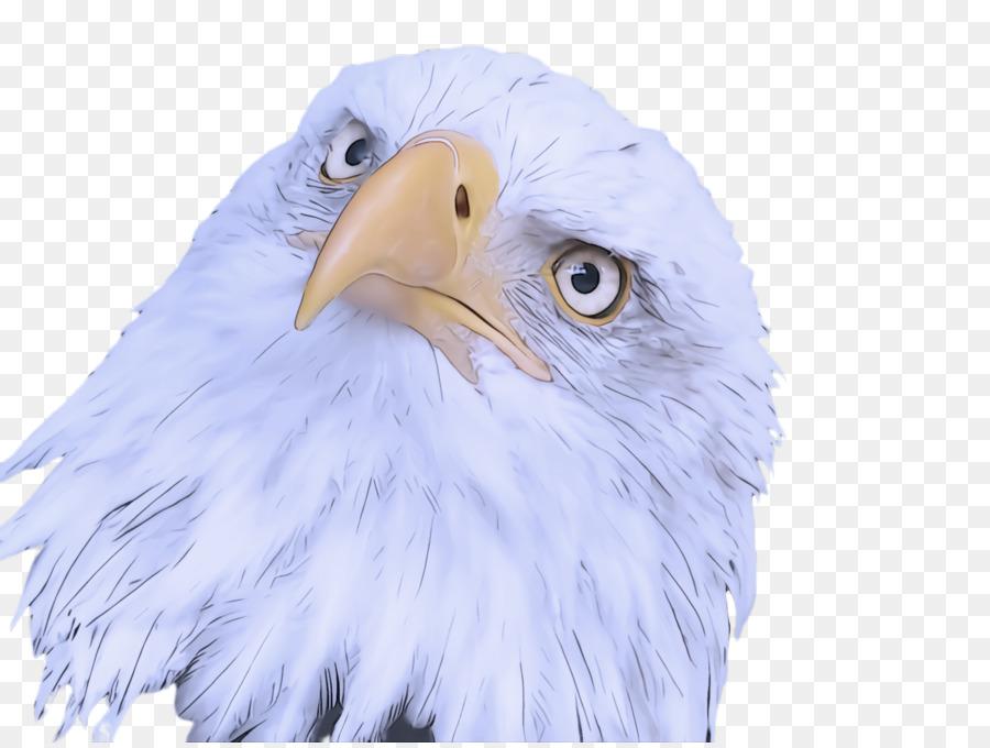 птица,